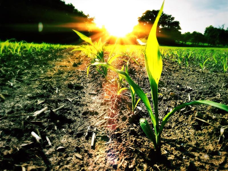 Apoiamos os empresários agrícolas